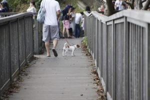 みどりの広場横の展望スポットと子犬テバちゃん