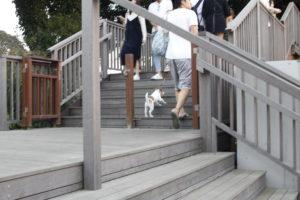 展望デッキを上る子犬テバちゃん
