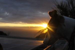 江の島の夕日と子犬テバちゃん