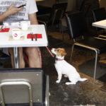BOWERY KITCHEN/バワリーキッチン(東京都世田谷区)~子犬とおでかけ~
