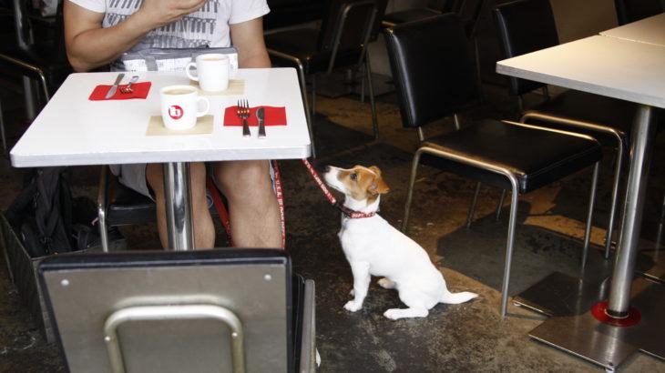 バワリーキッチン店内の子犬テバちゃん
