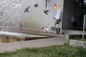 水のカーテンと壁の間に入る子犬テバちゃん