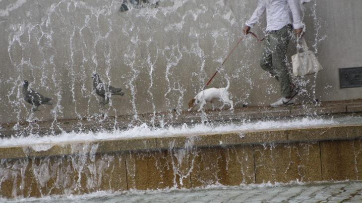 水のカーテン越しの子犬テバちゃん