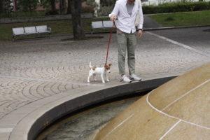 広場中心の丸いオブジェと子犬
