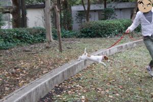 ジャンプする子犬テバちゃん