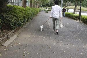 広い歩道の子犬テバちゃん