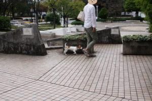 広場前の子犬テバちゃん
