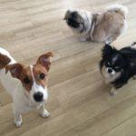 ベルウッド ペットホテル&スパ(神奈川県川崎市)~愛犬を預ける~