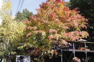 紅葉が美しいカフェ