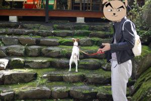 猿座カフェの階段を上がる子犬テバちゃん