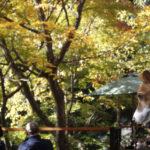 ENZA Cafe/猿座カフェ(長野県下高井郡)~子犬とおでかけ~