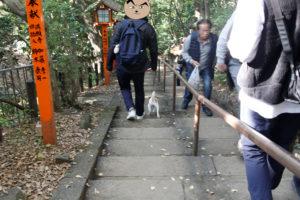 本堂の横の階段を下る子犬テバちゃん