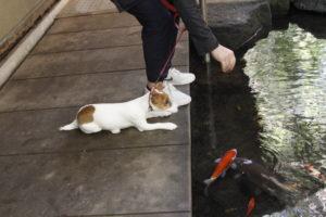 お茶屋さんの横の池と子犬テバちゃん
