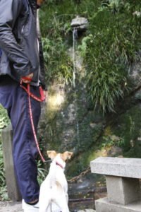 不動の瀧を眺める子犬テバちゃん