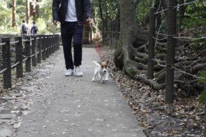 しっかりした根っこの横を歩く子犬テバちゃん