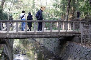 橋を渡る子犬テバちゃん