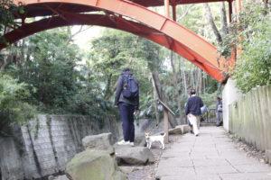眼鏡橋と子犬テバちゃん