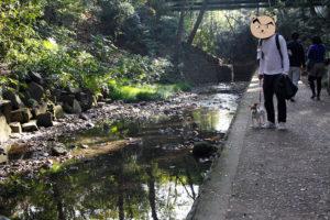 渓谷の美しい景色と子犬テバちゃん