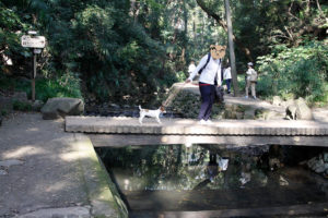 橋を怖がる子犬テバちゃん