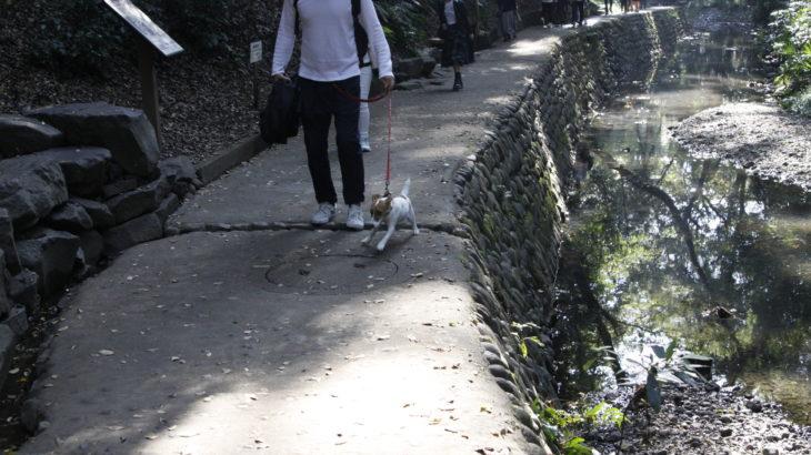 等々力渓谷・等々力不動尊(東京都世田谷区)~子犬とおでかけ~