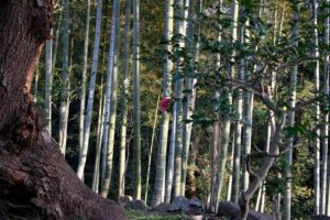 日本庭園内の竹林