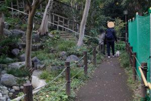 日本庭園内を歩く子犬テバちゃん