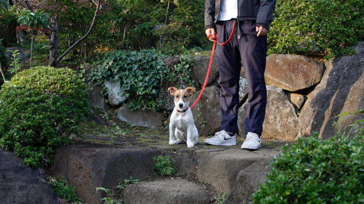 庭園内を上り終えた子犬テバちゃん