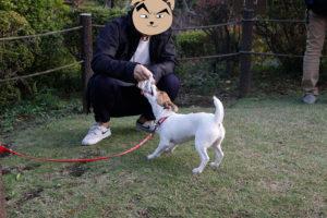 芝生広場で綱遊びする子犬テバちゃん
