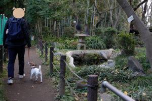日本庭園の池と灯篭とテバちゃん