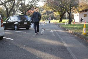 小金井公園駐車場を歩く子犬テバちゃん