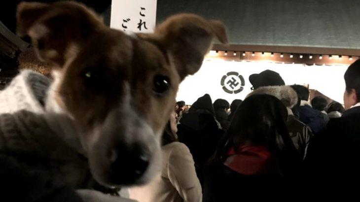 松陰神社(世田谷区)初詣編~子犬とお出かけ~
