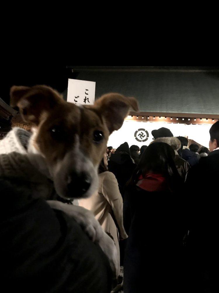 参拝する子犬テバちゃん
