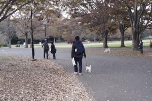公園を去るテバちゃん