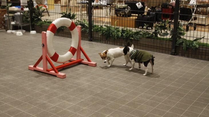 ジョーカーズタウン ヴィーナスフォート(江東区)~子犬とおでかけ~