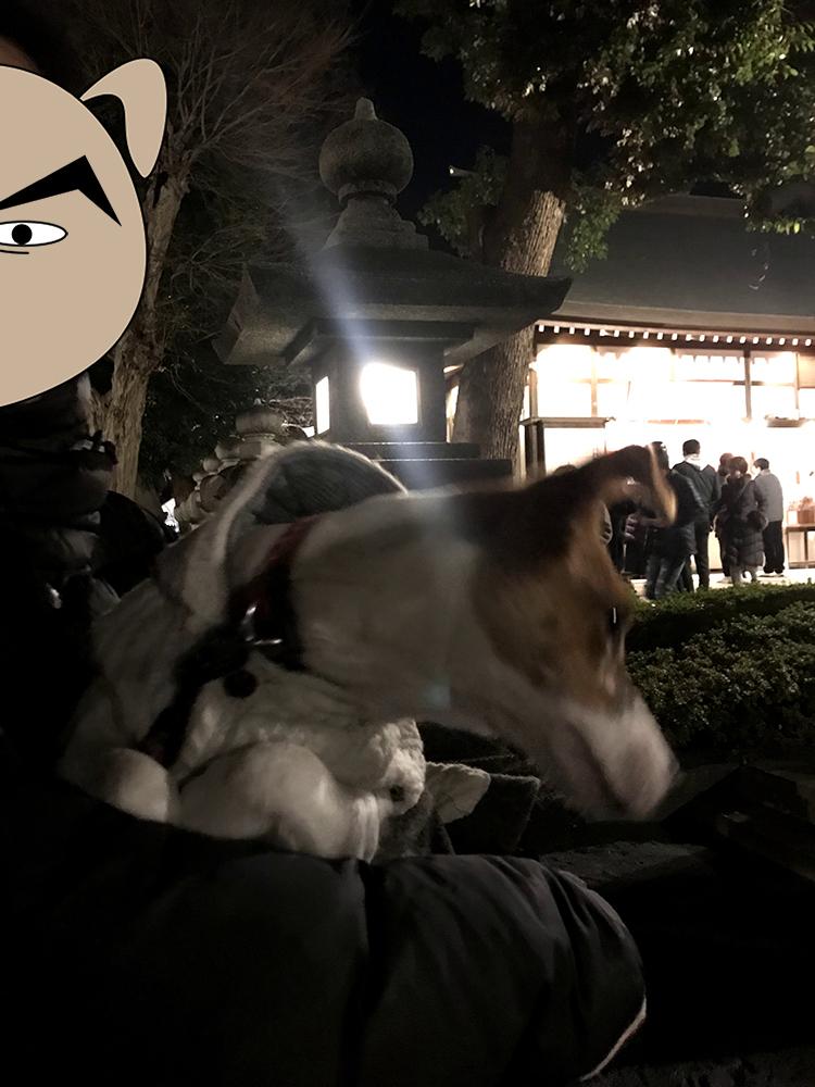 松陰神社の初詣で並ぶ子犬テバちゃん