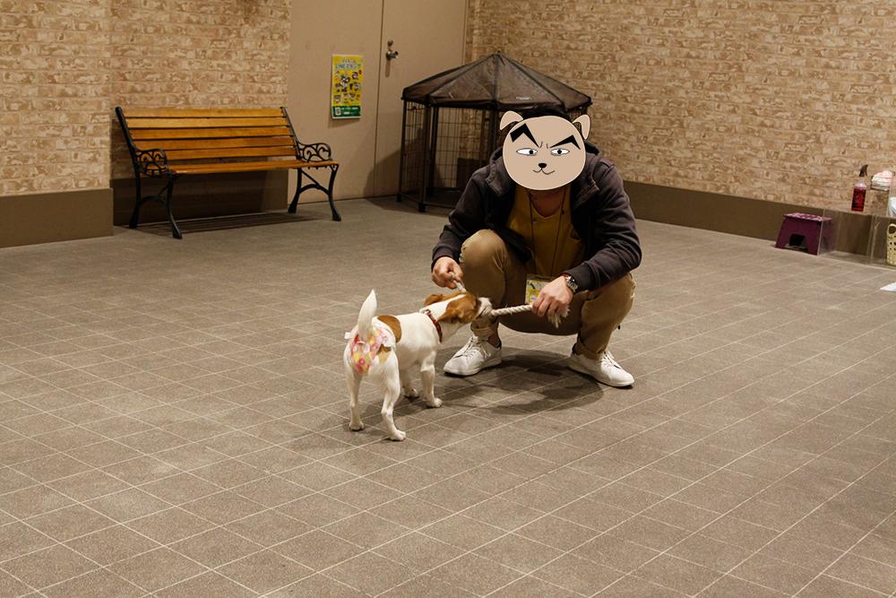 結局綱で遊ぶ子犬テバちゃん