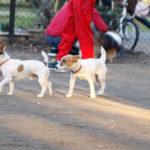 東京都立小金井公園ドッグラン(東京都小金井市)~子犬とお出かけ~