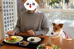ご飯を見つめるテバちゃん