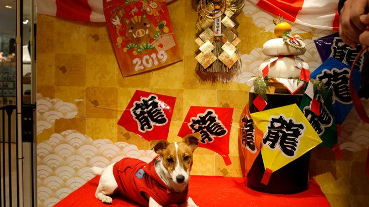 小谷流の里ドギーズアイランド(千葉県八街市)ドッグラン編~子犬とお出かけ~