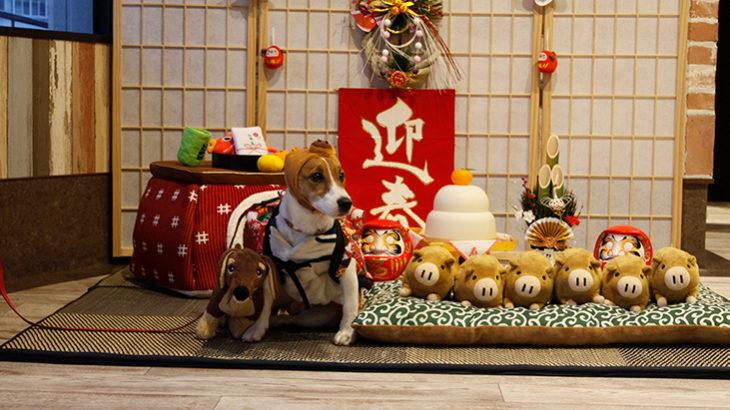 WANCOTT/ワンコット 室内ドッグラン(神奈川県横浜市中区)~子犬とおでかけ~