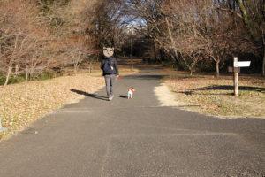 桜ケ丘公園内の舗装された道